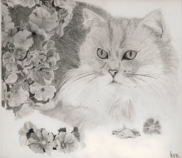 cat sketch by June Gilbank