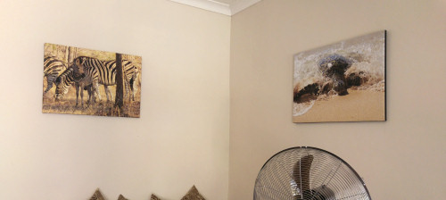 photo canvases on the wall