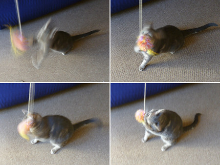 crocheted cat 'fishing' toy on a string by planetjune
