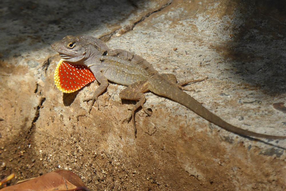 Blog – PlanetJune by June Gilbank » Hawaii wildlife