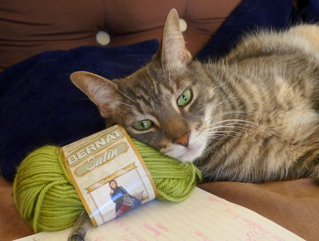 maui helping me choose appropriate yarn colours