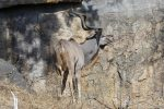 Apparently the Kudu's horns complete an extra spiral every two years