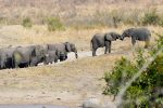 Did you know elephants greet each other by shaking trunks?! It's true - we witnessed it!