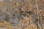 we had a magical sighting of a beautiful Leopard
