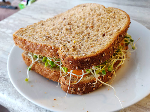 a sandwich made with home-grown clover sprouts