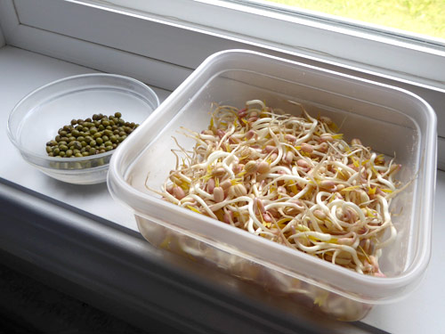 mung bean seeds and bean sprouts