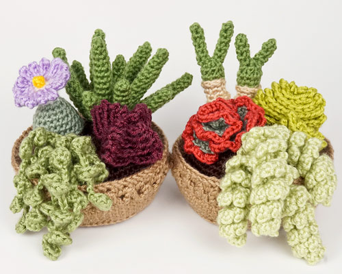 Blog Planetjune By June Gilbank New Succulent Collections 3 4