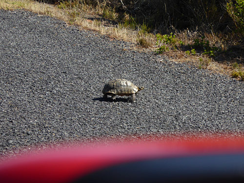 tortoise photo by June Gilbank