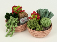 Succulent Collections 1 & 2 multipack